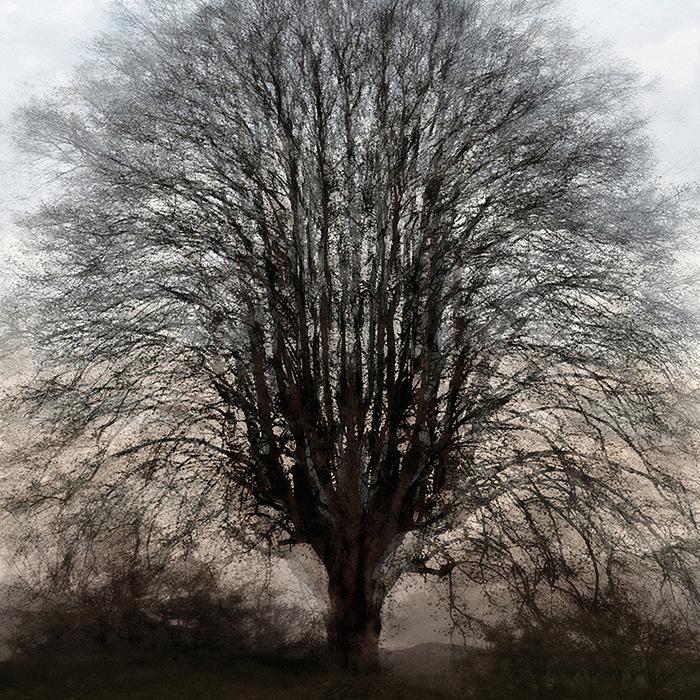 susanne minder bildarchiv – susanne minder photo collection – photocollection – by peter gartmann + sabina roth – art + photography – kunst + fotografie, basel, zürich, schweiz – switzerland – kunst – trees – art paintings – represented by marco stücklin – www.marco-stuecklin.ch – art book – kunstkatalog – christo and jeanne-claude – wrapped trees – christo – fondation beyeler – ernst beyeler – riehen – photos – fotos
