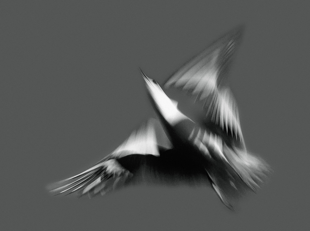 fliegen – seagulls in flight – möwen im flug – susanne minder art picture collection – susanne minder photo collection – collection susanne minder – bildarchiv – photos – pictures – art paintings – ilse baumann – hans-peter bier – frossard reisen – corinne frossard – andré frossard – art book – kunstkatalog – exhibition – ausstellung 1981 – kunsthaus zürich – by peter walther gartmann – peter gartmann – walther gartmann – gartmann – art + photography – kunst + fotografie – basel, zürich, schweiz, switzerland – sabina roth – roth – represented by marco stücklin – www.marco-stuecklin.ch – ramstein optik – andi bichweiler