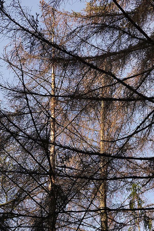 hardwald – trockenschäden – trockenschäden im wald – trockenheit – birsfelden – pratteln – muttenz – waldeigentümer – forstbetriebe – bürgergemeinde der stadt basel – www.bgbasel.ch – forstbetrieb der bürgergemeinde der stadt basel – christian kleiber – buche – buchen – rotbuche – eschen – fichten – rottannen – weisstannen – wald – baum – bäume – laubbaum – laubbäume – nadelbaum – nadelbäume – borkenkäfer – buchdrucker – wald basel – www.wald-basel.ch – afw – amt für wald beider basel – ueli meier – basel-landschaft – baselland – baselbiet – basel-stadt – susanne minder art picture collection – susanne minder photo collection – collection susanne minder – bildarchiv susanne minder – susanne minder – minder – art – kunst – art paintings – art photography – art + photography – fotografie – fotografie + kommunikation – by sabina roth – sabina roth – roth – www.instagram.com/sabinaroth_photography – art + photography – kunst + fotografie – basel – baselland – zürich – schweiz – switzerland – peter gartmann – peter walther gartmann – walther gartmann – gartmann – www.instagram.com/petergartmann_art – represented by marco stücklin – www.marco-stuecklin.ch – marco stücklin – stücklin – stuecklin